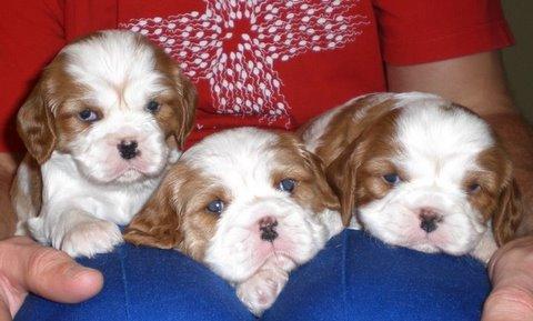 billis-puppies.jpg