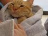 חתול בתספורת