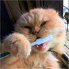 וטרינר טיפולי שיניים