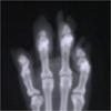 רדיולוגיה לכלבים וחתולים